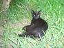 Катуса - кошка по тунисски