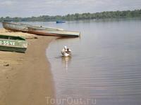 Зеленая стоянка в Козловке. Сладкая парочка - гусь да гагарочка :)))