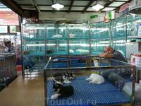Рынок животных