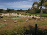 В 15 км. от Пафоса, недалеко от местечка Коралл Бэй расположен  Птичий Парк
