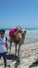 какая Африка без верблюдов