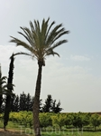 И снова пальма