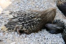 Колючая семейка Зоопарк Фригиа - Friguia Park - между Сусом и Хаммаметом