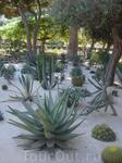 Сады бахаи. Кактусы здесь похожи на распустившиеся бутоны, поражают своей ухоженностью и здоровьем. За всем этим зелёныи изобилием штатно следят 90 садовников ...