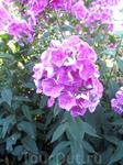 А здесь просто цветочки, чтобы поднять настроение тем кто посмотрит эти фото