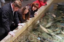 а это аквариум с зубатками!