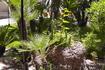Внутренний дворик, пальмы и кактусы.