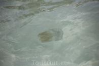 Медуза. Пляж Бай Сао.