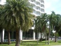 На территории отеля. Великолепные пальмы