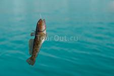 морская рыбалка - бычок-рыбка )