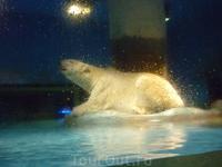 Большущий белый медведь, сидит как фотомодель (достали наверно его уже все, даже не шелохнется).