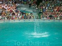 Сочинский дельфинарий Акватория