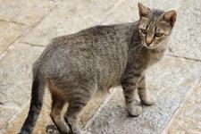Кошка в Которе..