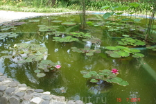 Сухум, Ботанический сад