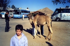 Ранним утром перед поездкой в Луксор
