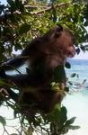 бухта обезьян..Пи-Пи Дон