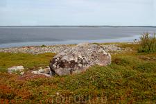 Природа тундры на острове Заяцкий.