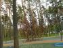 Площадка в Дзинтару межапарке для детей