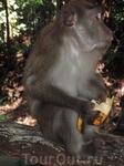 А в джунглях попадаются вот такие наглые обитатели, которые отнимают бананы и другую еду у туристов.