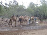 Проводили караван верблюдов