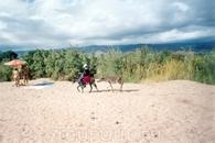 Вот такие там зебры, на том Иссык-Куле