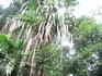 экскурсия Сафари, рафтинг, джунгли