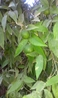 в оазисе (цитрусовые)