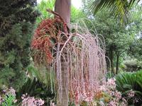 Красота свисающая с крон деревьев
