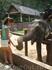 здесь также можно было потом отблагодарить бананами своего слона)
