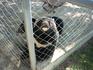 Малыш гималайского медведя захотел пообщаться. В Сафари парке есть свой детский сад для разных животных.