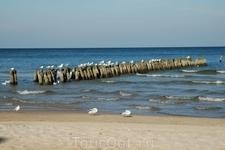 Чайки с морским пейзажем