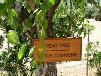каждое дерево подписано