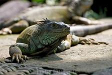 Ящерка из сада Рептилий.