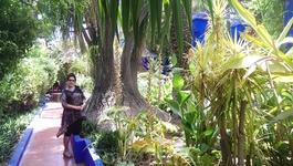 Сад Мажореля - буйство красок, мир растений и природной красоты!