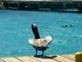 там дельфинчики торчат... на фоне)