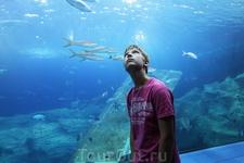 В морском аквариуме.