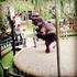 Знакомство с суматранскими слонами начинается с представления.