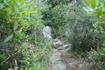 тропа в Палеокастрицу