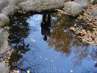 Осень в отражениях