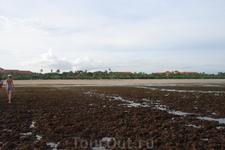 Бали/ на пляже - отлив