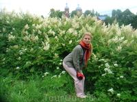 Белые цветы, начало июля, Рождествено. Ну не замечательная пора? Если учесть, что всего 12 градусов тепла в городе. Тут может чуть повыше. ))