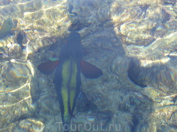 Рыбы Красного моря.