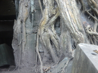 корни проросли вокруг лица небесной танцовщицы апсары