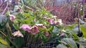 Тепло, цветут цветочки.