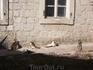 Старый город в Которе - город кошек