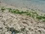 Грязька на пляже Кранево после сильных ночных волн