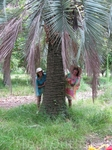 по пути на пляж не пропускали ни одной пальмы, со всеми фоткались