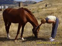 лошадь Антон.