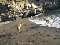 собаки там такие...охотничьи ... на кроликов