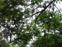 Интересные листья у этих деревьев